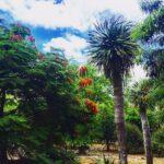 """<span class=""""title"""">ハワイで一番ワイルドな植物園「ココクレーター・ボタニカル・ガーデン」</span>"""