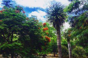 ハワイで一番ワイルドな植物園「ココクレーター・ボタニカル・ガーデン」